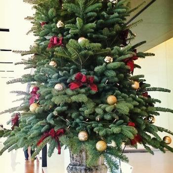 ショールームの活け込み、クリスマスツリー