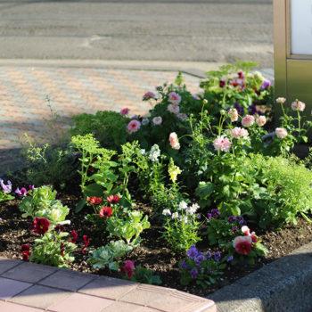 歯科看板スペースの花壇