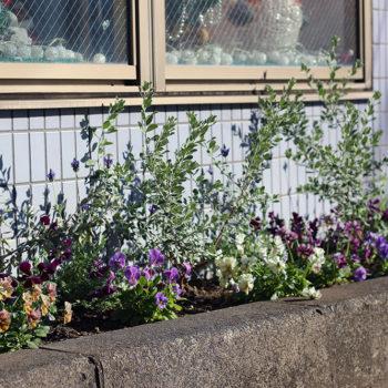 歯科の歩道に面した花壇
